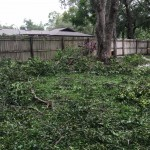 Backyard branch and limb mess. Our tortoise's habitat is under that mess.